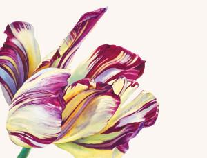 Rosie Sanders  Love's favourite  Watercolour on Richard de Bas handmade paper  15.35 x 19.68ins (39 x 50cm)