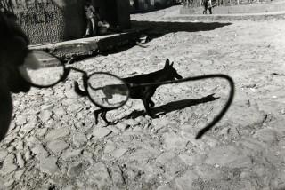 Larry Towell, Perquín, Morazán, El Salvador [dog/glasses], 1991