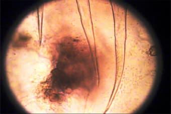 I am cute germs (still photo), video, digital, colour, 2001-2002.
