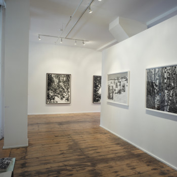 Natural Order, Purdy Hicks Gallery