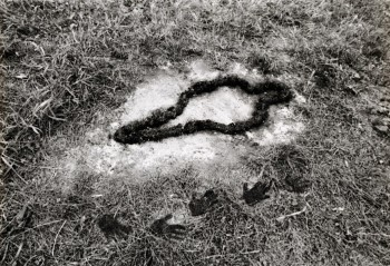 Ana Mendieta, Untitled: Silueta Series, 1978. Solomon R. Guggenheim Museum, New York Purchased with funds contributed by the Photography Committee, 1998 © Ana Mendieta