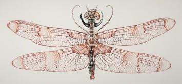 rodolpho parigi  libélulis myraxcium, 2015