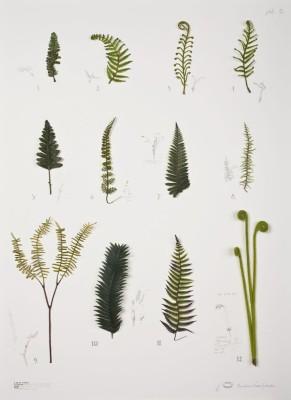 alberto baraya, expedición nueva zelandia: herb ferns plate, 2009
