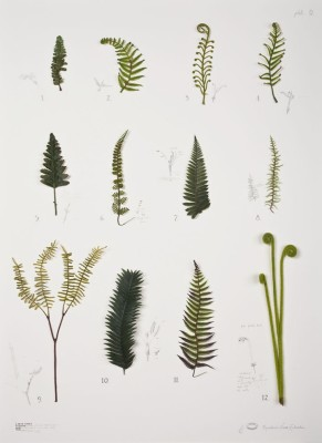 <p><strong>alberto baraya</strong>,<strong>&#160;</strong><em>expedici&#243;n nueva zelandia: herb ferns plate,&#160;</em>2009</p>