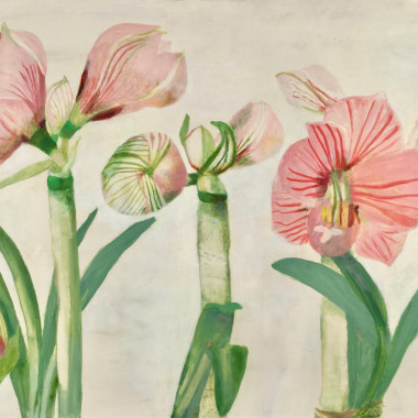 Mary Newcomb - Studies of Amaryllis Flowering, 1986