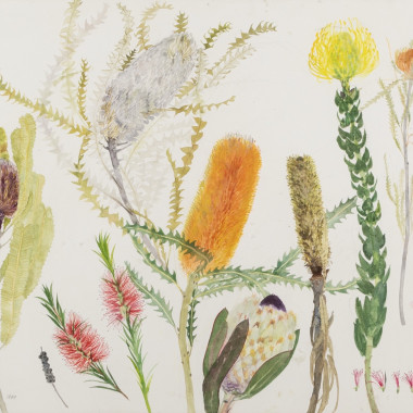 Elizabeth Blackadder - Banksias and other Australian Plants, 1999