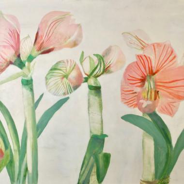 Mary Newcomb - Studies of Amaryllis Flowering, 1986