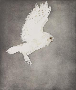 <span class=%22title%22>Little Owl, from Six Owls [W 119]<span class=%22title_comma%22>, </span></span><span class=%22year%22>1977</span>