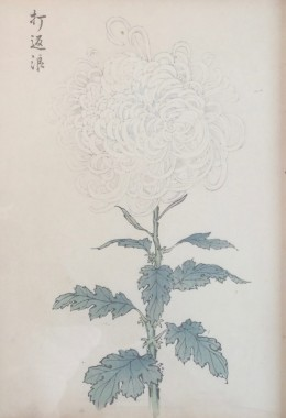 <span class=%22title%22>One Hundred Years of Chrysanthemums VIII<span class=%22title_comma%22>, </span></span><span class=%22year%22>1893</span>