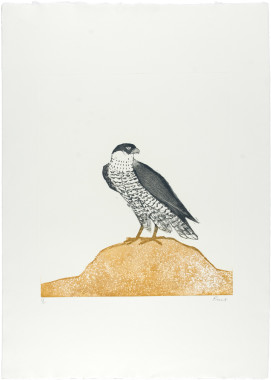<span class=%22title%22>Peregrine Falcon, from Birds of Prey<span class=%22title_comma%22>, </span></span><span class=%22year%22>1974</span>