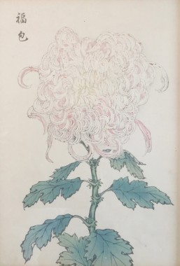 <span class=%22title%22>One Hundred Years of Chrysanthemums V<span class=%22title_comma%22>, </span></span><span class=%22year%22>1893</span>