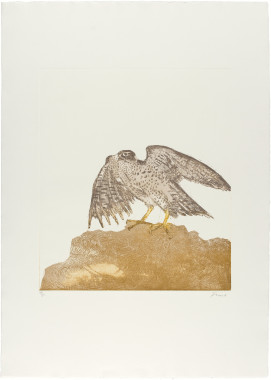 <span class=%22title%22>Goshawk, from Birds of Prey<span class=%22title_comma%22>, </span></span><span class=%22year%22>1974</span>
