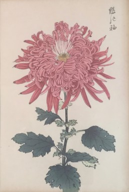 <span class=%22title%22>One Hundred Years of Chrysanthemums XIII<span class=%22title_comma%22>, </span></span><span class=%22year%22>1893</span>