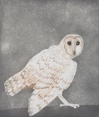 <span class=%22title%22>Barn Owl, from Six Owls [W 117]<span class=%22title_comma%22>, </span></span><span class=%22year%22>1977</span>