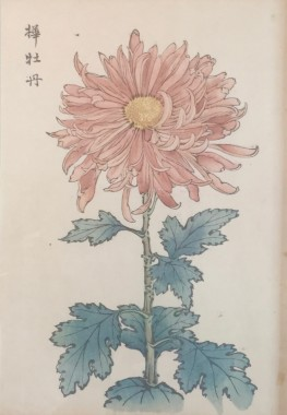 <span class=%22title%22>One Hundred Years of Chrysanthemums VII<span class=%22title_comma%22>, </span></span><span class=%22year%22>1893</span>