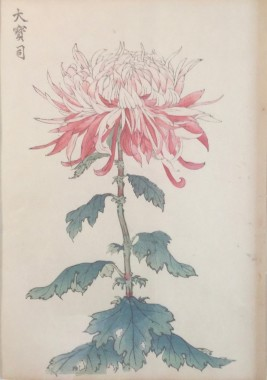 <span class=%22title%22>One Hundred Years of Chrysanthemums VI<span class=%22title_comma%22>, </span></span><span class=%22year%22>1893</span>