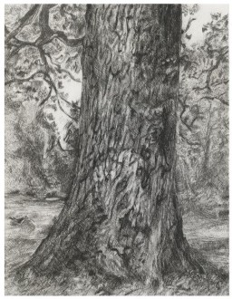 After Constable's Elm, 2003