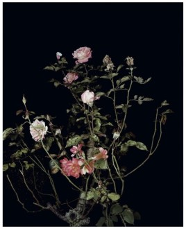 The Rose Gardens (Display: II) (III), 2013