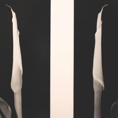 Calla Diptych-Vincent Vallarino