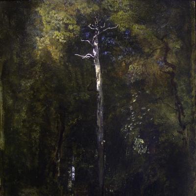 Sous-Bois a Fontainebleau