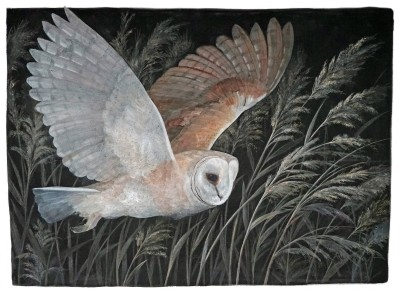 Emma Faull , Barn Owl hunting
