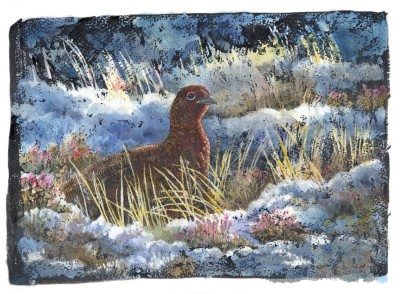 Emma Faull , Red Grouse in snow
