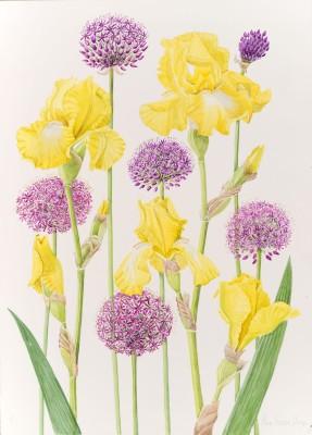 Ann Fraser, Yellow Tall Bearded Iris with Alliums