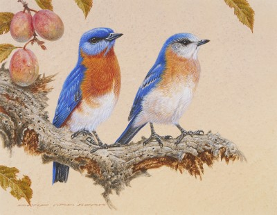 David Ord Kerr, Eastern Blue Bird