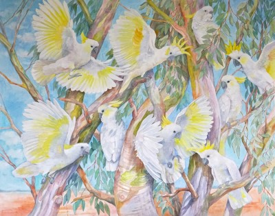Emma Faull , Sulphur-crested Cockatoos