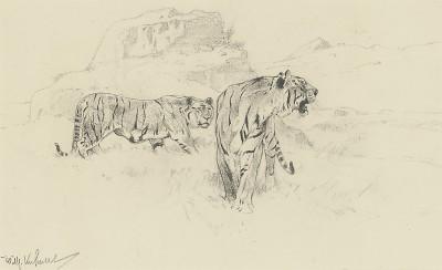 Wilhelm Kuhnert , Tigers
