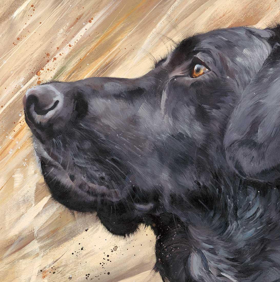 Black Labrador in Reeds