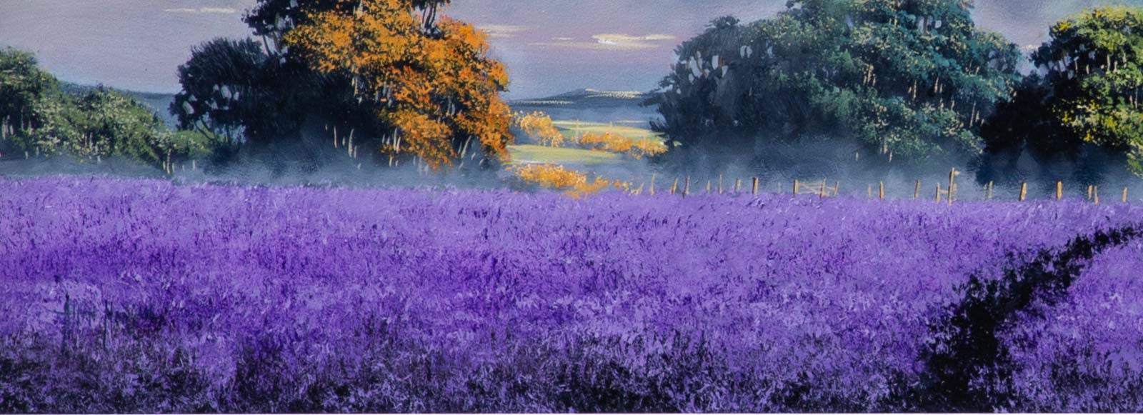 A Walk Through the Lavender