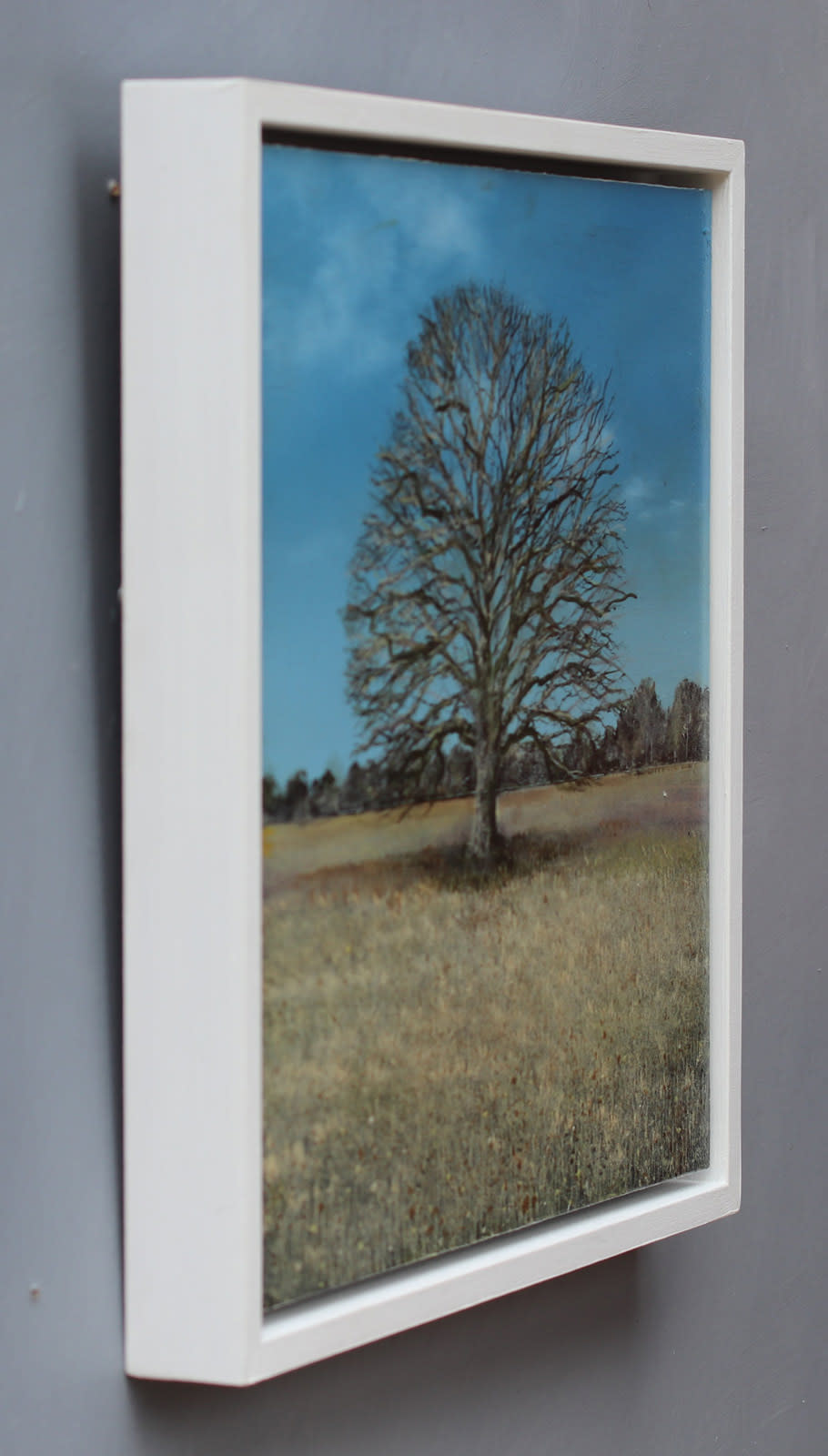 Ancient Oak Winter Study