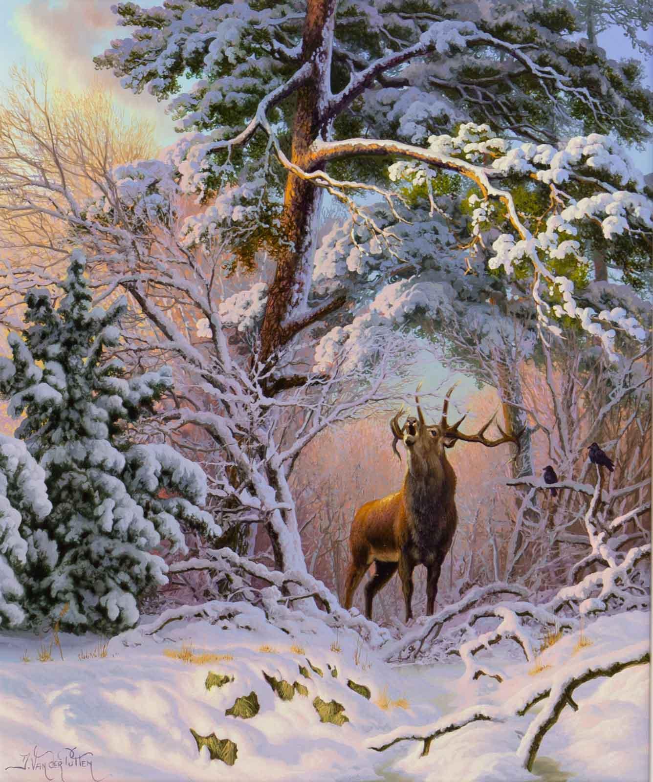 Red Deer at Mantles Heath, Northamptonshire