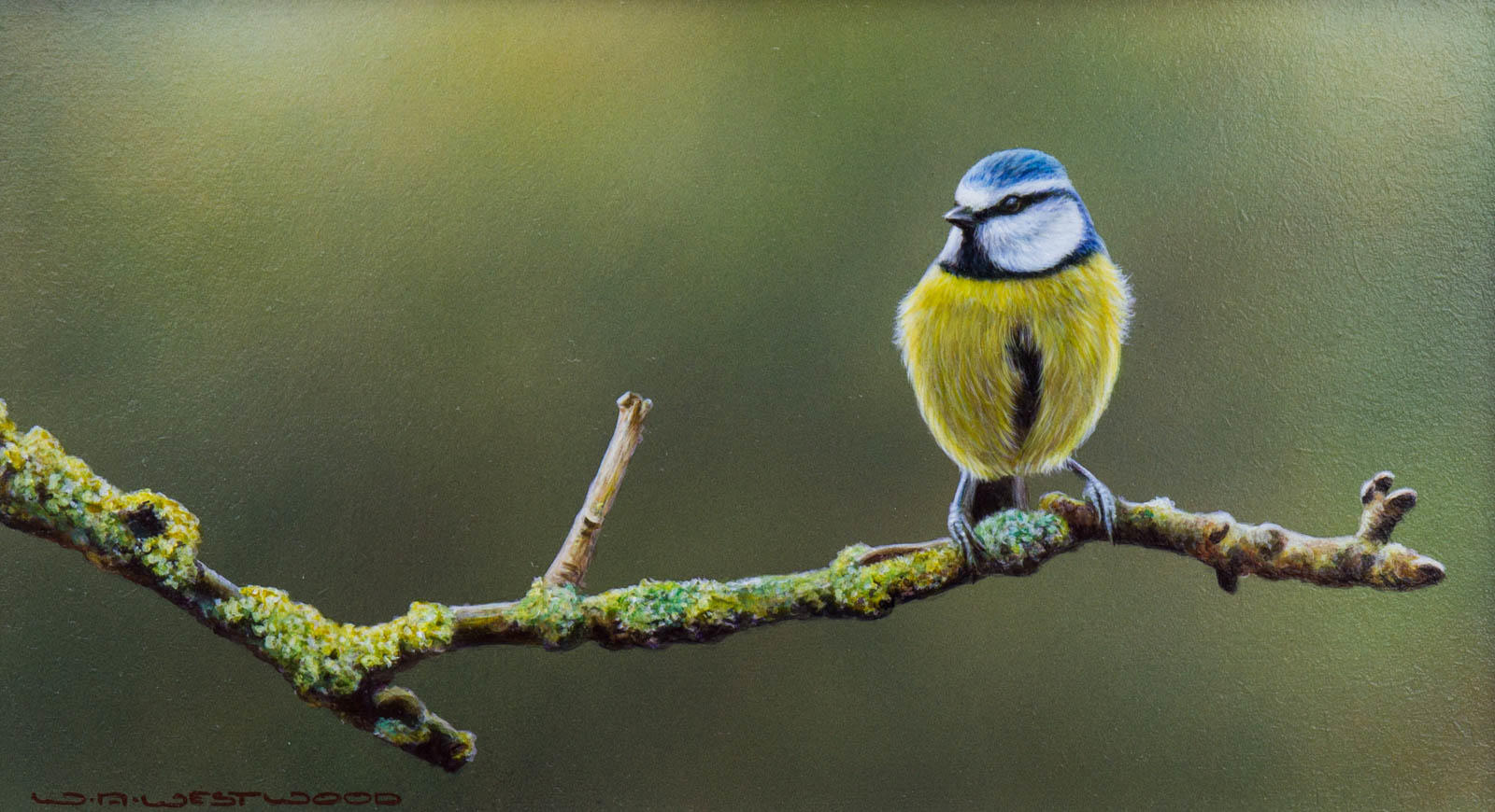Bluetit's Rest