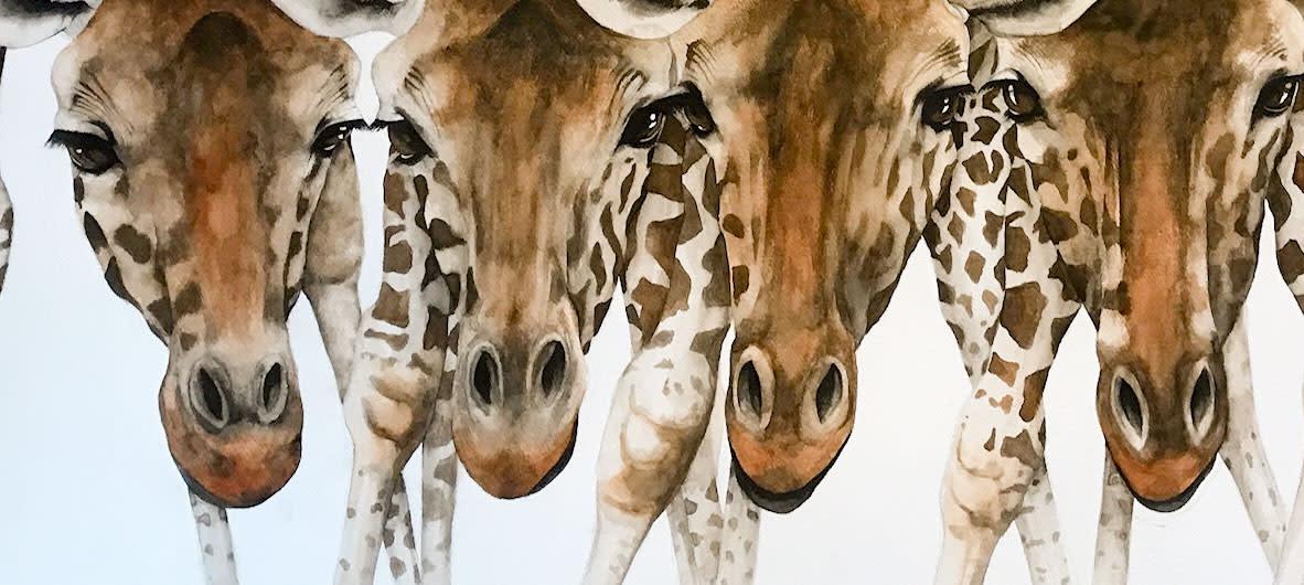Drinking Problem, Giraffes