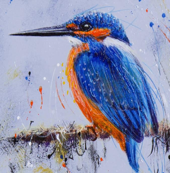Kingfisher Stare