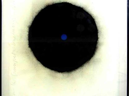 Black Trumpet with Blue Center June 3 2009