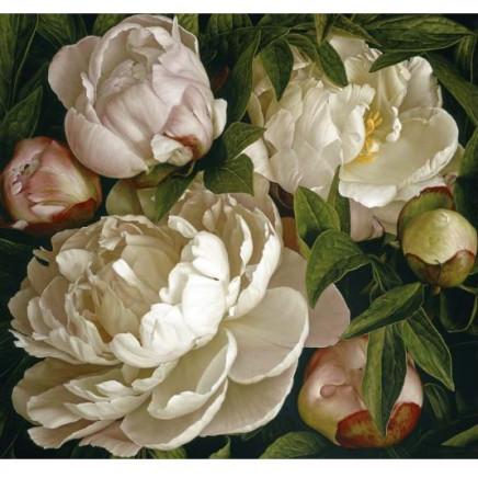 Mia Tarney - Peony Gardenia