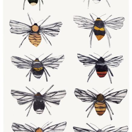 Beatrice Forshall - British Bumblebees
