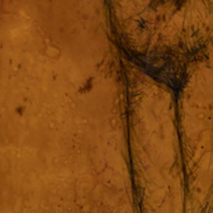 Craig Ruddy - Femme, 2003-04