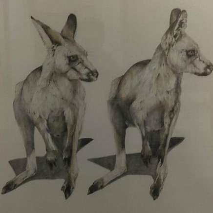 Karen Barbouttis - Grey Kangaroos Featherdale Park, 2018