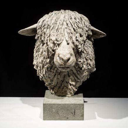 Hamish Mackie - Cotswold Ram Head, 2015