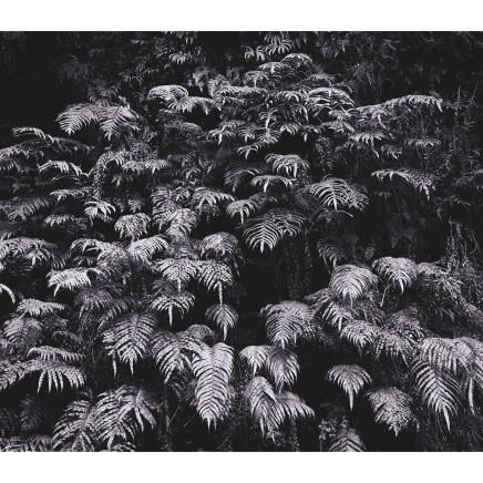 Andrew Drummond - Ferns, 2006