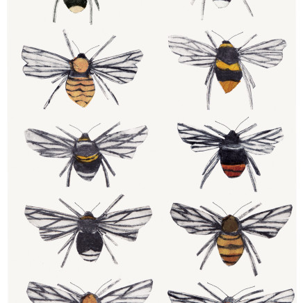 Beatrice Forshall - British Bumblebees
