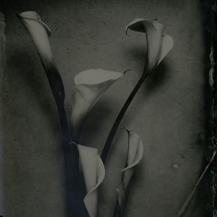 Nicolas Laborie - Lillies