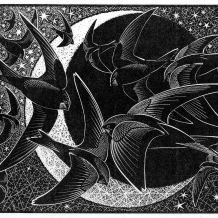 Colin See-Paynton - Nocturnal Encounters - Swifts, Stars and Sickle Moon