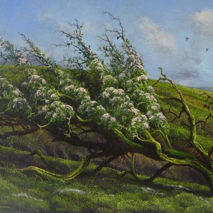 Gerald Dewsbury - Hawthorn, Long Mynd