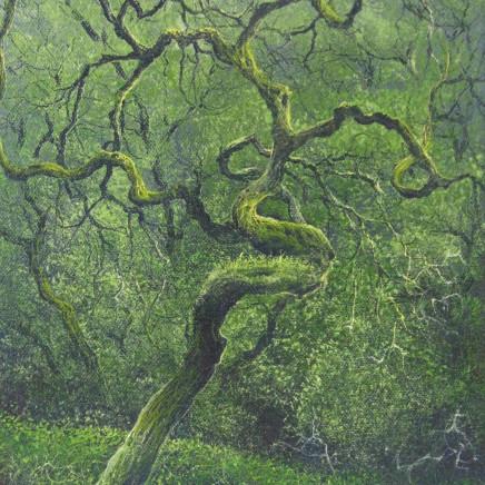 Gerald Dewsbury - Twisted Oak, Maentwrog