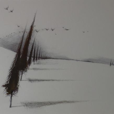 Dewi Tudur - Coed Cyprys / Cypress Trees